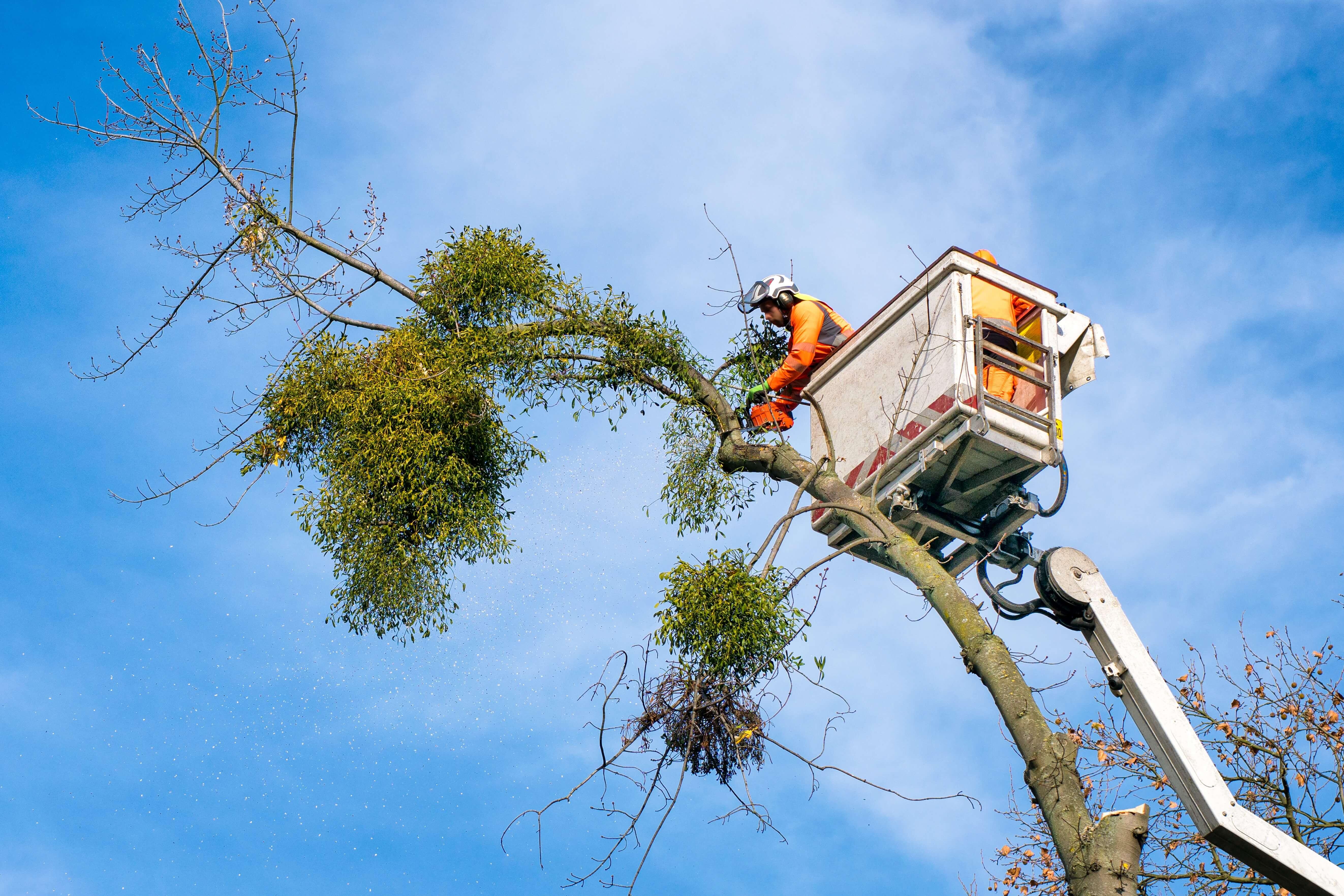 Baumpflege-Kommunales-Forum-Verlag-Herkert